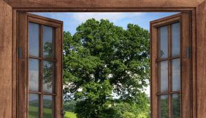Окна деревянные со стеклопакетом для дачи, дома и квартиры - плюсы и минусы