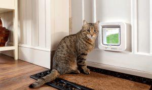 Лаз для кошки в двери своими руками: как оборудовать лаз для питомца?